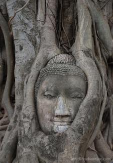 ayutthaya22